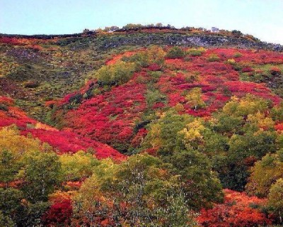 大雪山 400x320 紅葉前線到来!!日本一早い紅葉がピークです♪