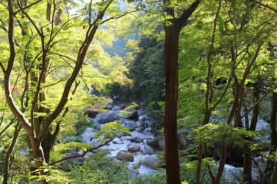 image5 400x266 絶景!昇仙峡のランチスポット♪