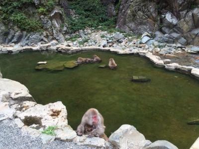 image2 400x300 日本で唯一!温泉に入る猿?!