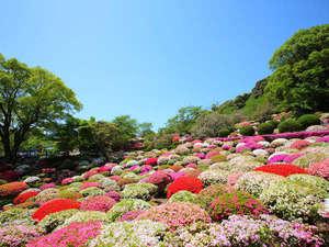 さがけん 人気急上昇♡春の旅行先ランキングTOP10