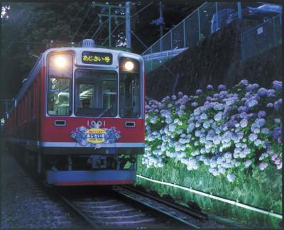 あじさい電車 400x324 初夏の訪れを感じよう~6月季節の花鑑賞~