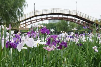 潮来あじさい 400x266 初夏の訪れを感じよう~6月季節の花鑑賞~