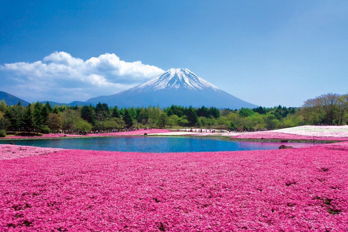 shiba fuji 桜の次に行きたい!絶景の花畑スポット9♪関東編
