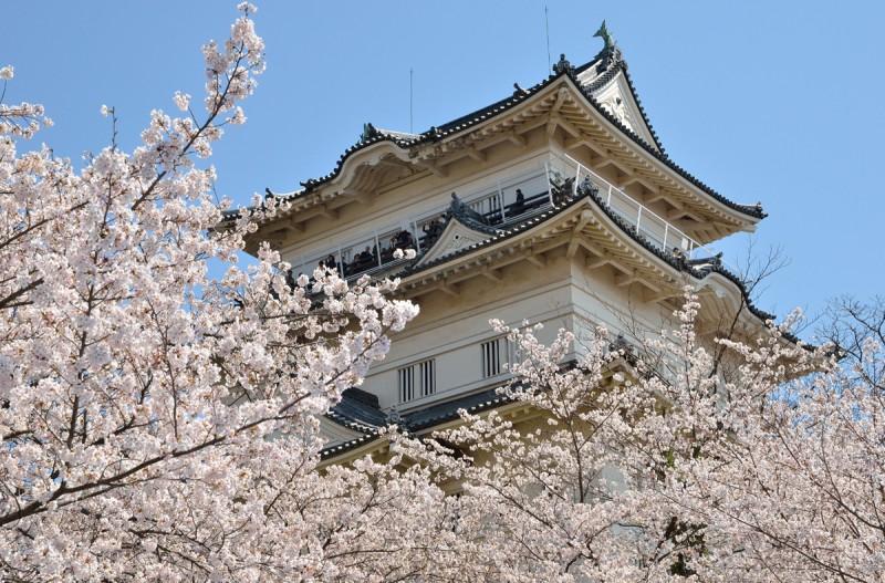 小田原城址公園・桜 春が待ち遠しい!美景の関東さくらスポットまとめ