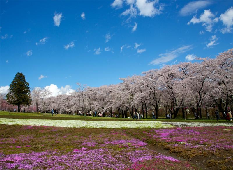 赤城千本桜 春が待ち遠しい!美景の関東さくらスポットまとめ