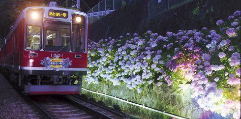 あじさい電車・箱根 梅雨の時期にぴったり!雨だから行く観光地