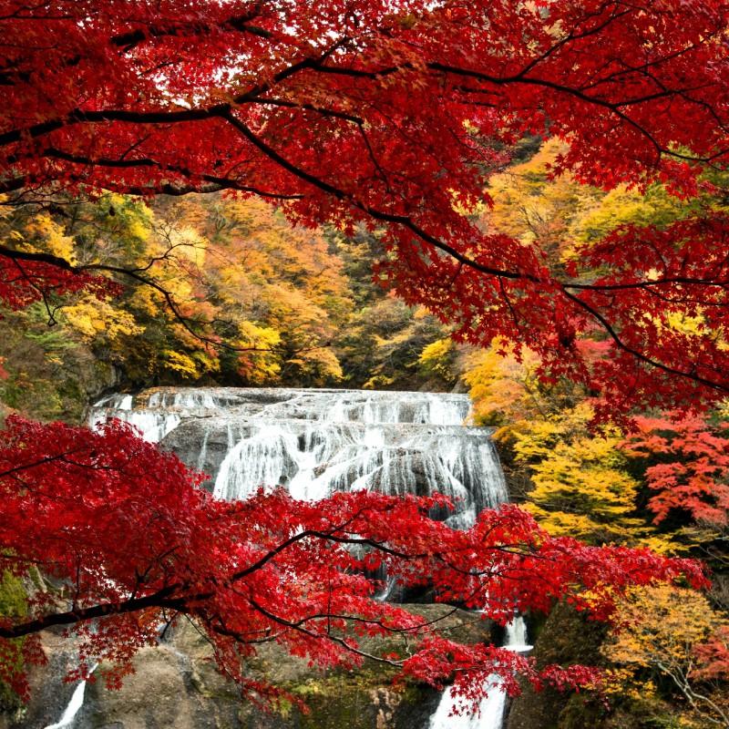 袋田の滝 秋の女子旅計画~りんご狩り&モコモココキア~